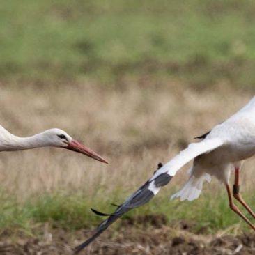 Птицы и другие виды