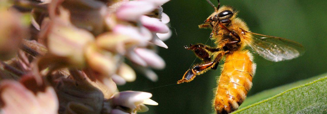 Pesticides systémiques